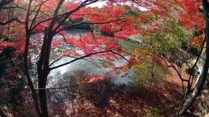 森林植物園3