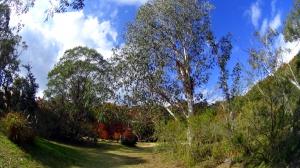 森林植物園7