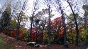 森林植物園9