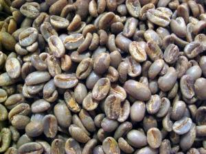 ゲイシャ生豆