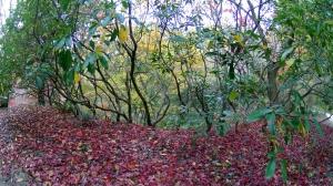 森林植物園5