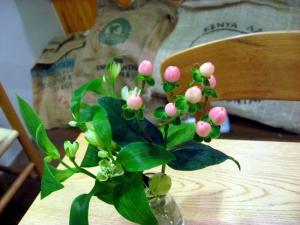 今日の花(2015年1月26日)